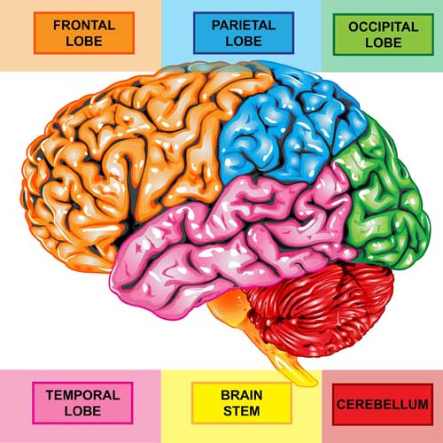 Brain Color Coded