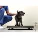 VET330WH Pet Scales