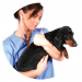 Regalia Oxygen Bar Concentrator Veterinary Applications