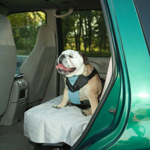 Bergan Travel Harness