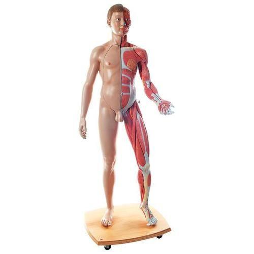 Life-Size Dual Sex Human Figure