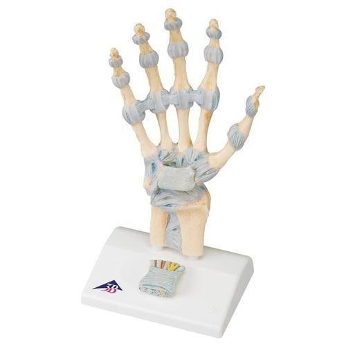 Hand Skeleton Model