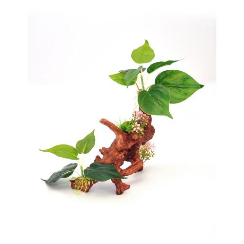 Decorative Ficus