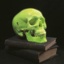 Glow In the Dark Skull Model