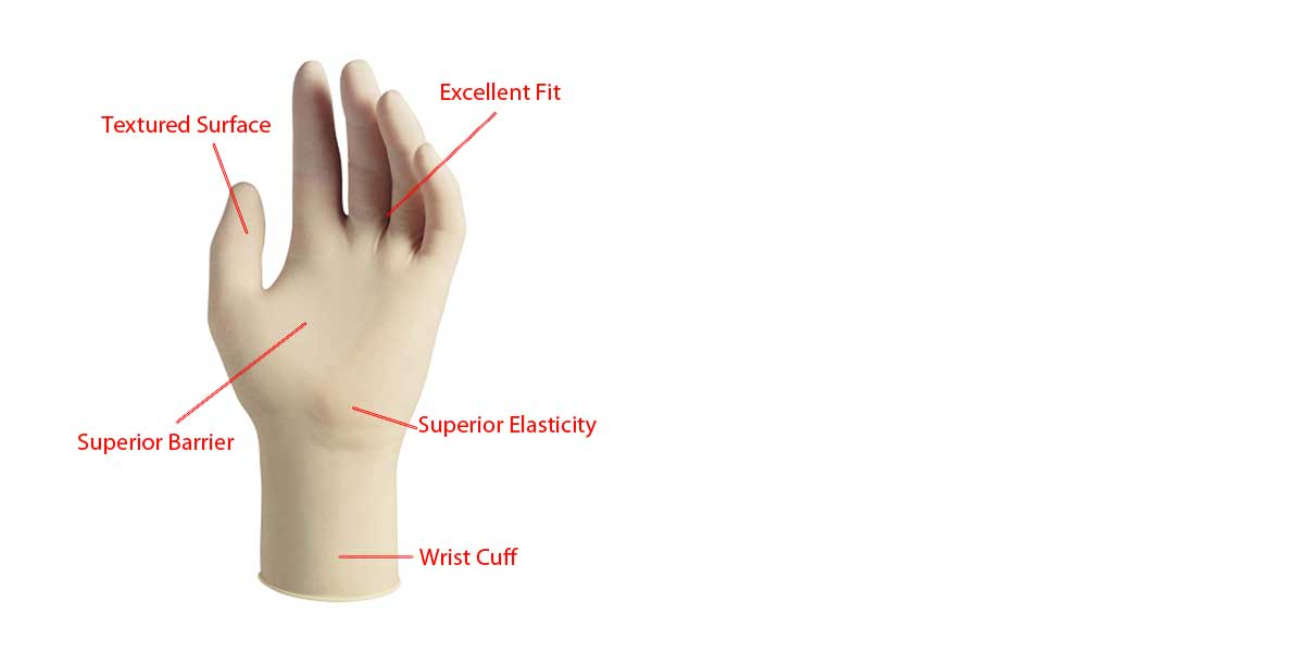 Anatomy of a Medical Grade Latex Glove