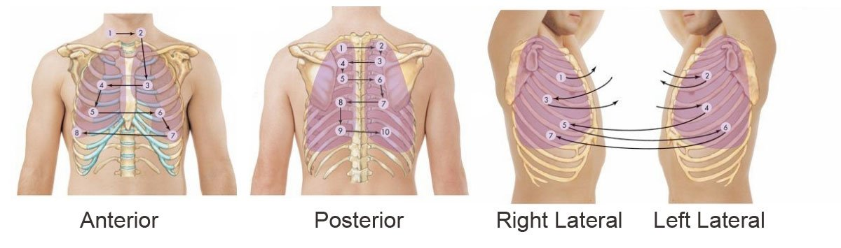 Respiratory Auscultation Sites